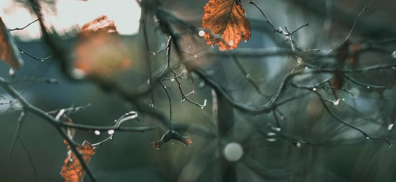 Basteln mit Blättern im Herbst