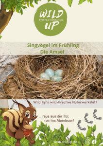 Singvögel im Frühling beobachten