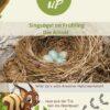 Singvögel im Frühling entdecken