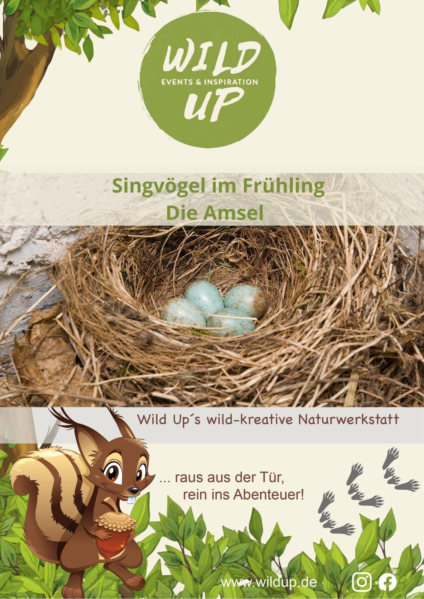 Singvögel kennenlernen
