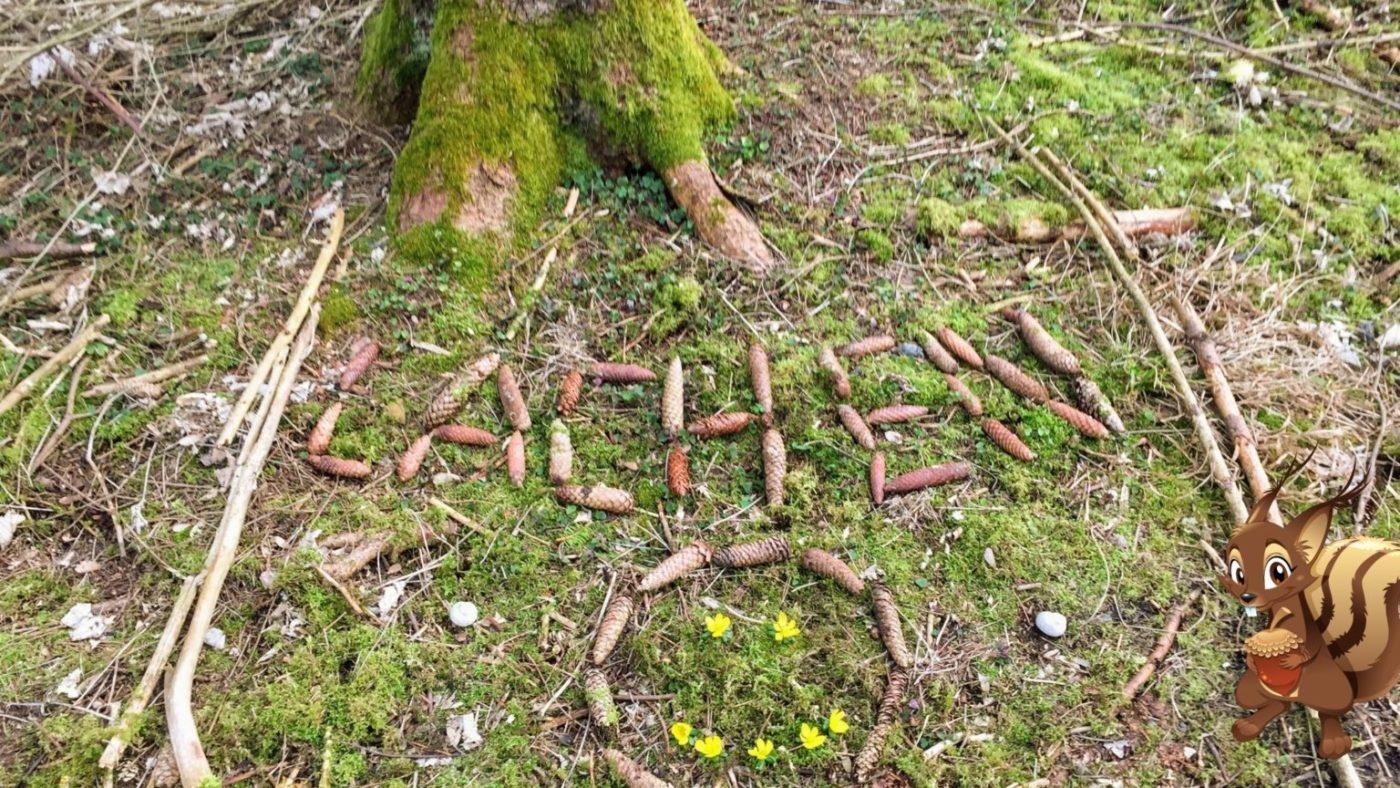 Wald Bild legen